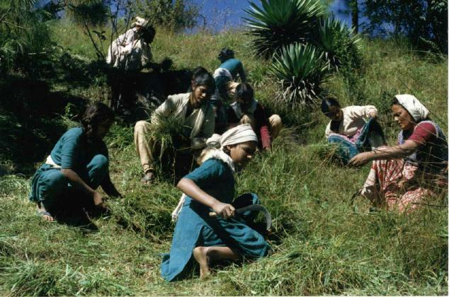 In October the oldest girls and the staff harvest grass for winter food