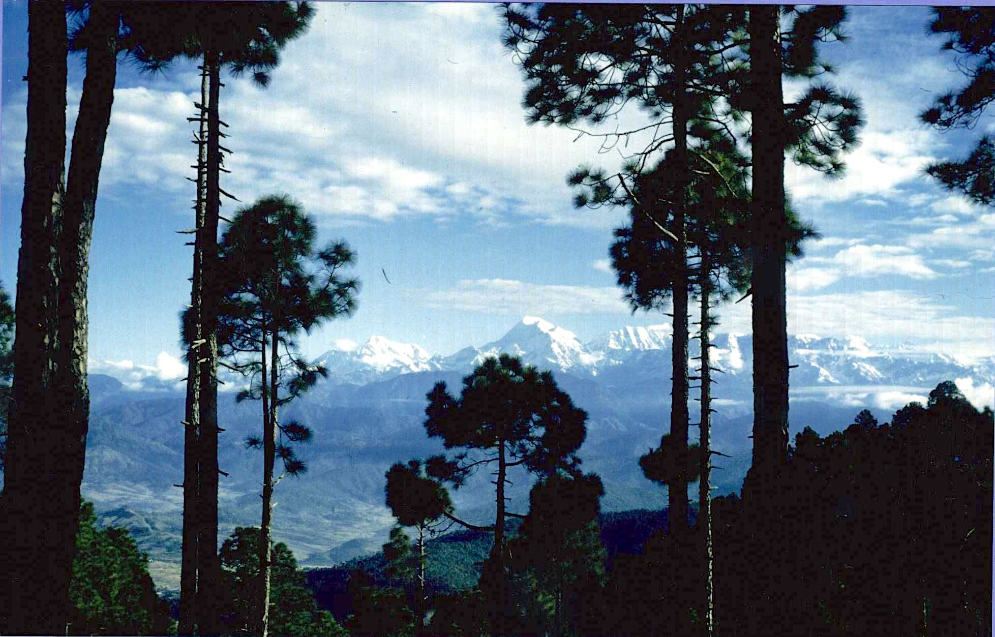 The Himalayas seen from the woods above the Ashram